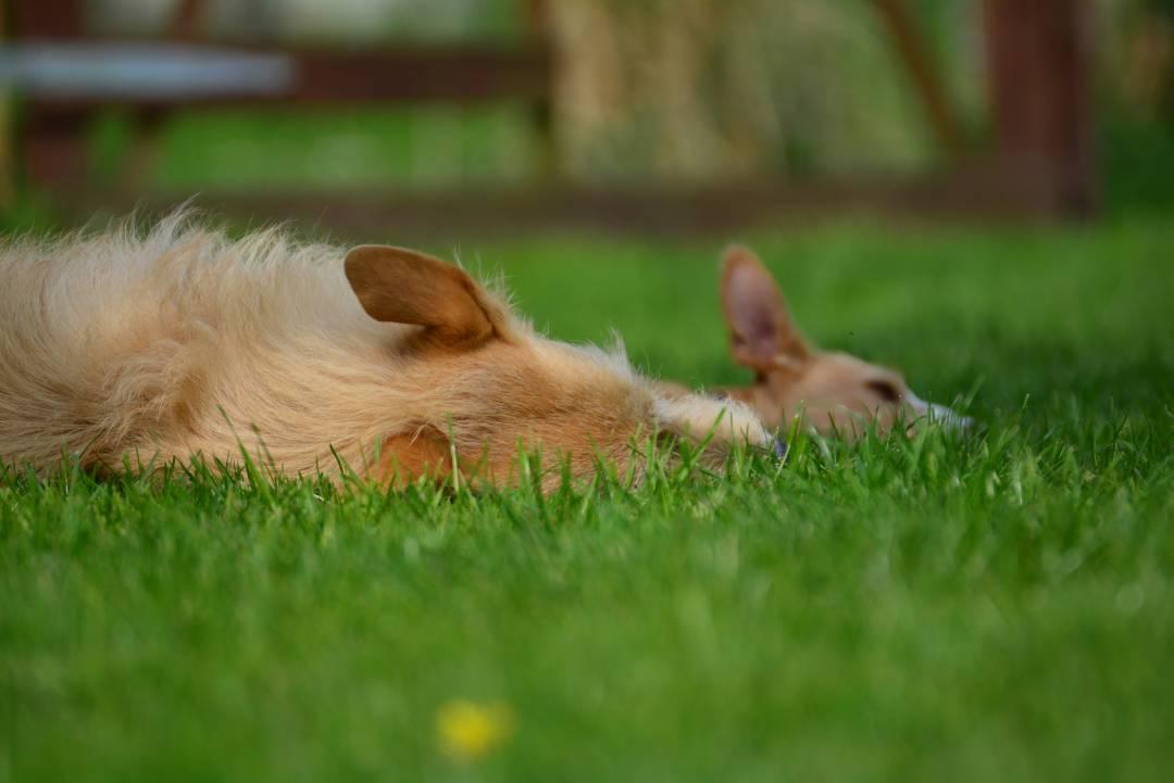 APORT Hundeschule 103