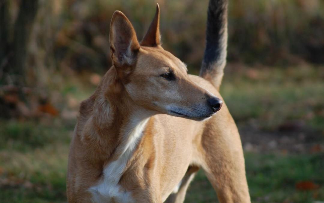 Souveränität in der Hundebeziehung