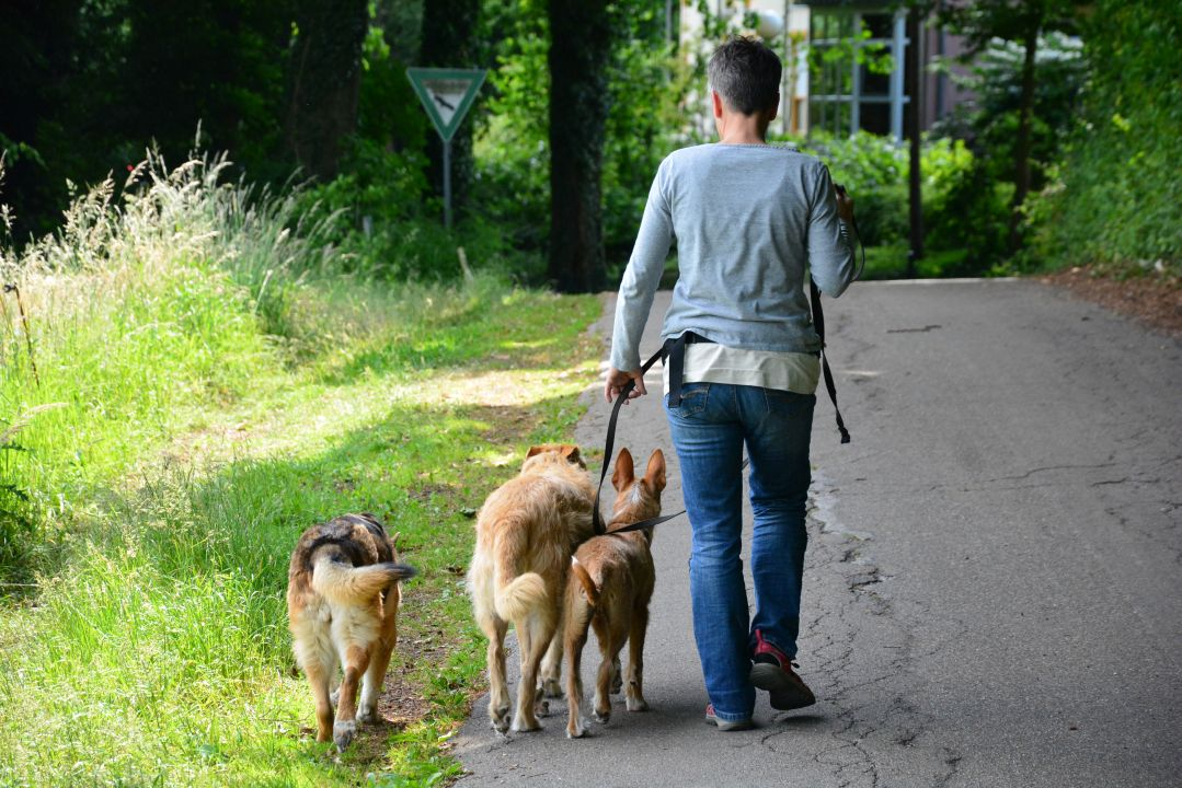 APORT Hundeschule 082