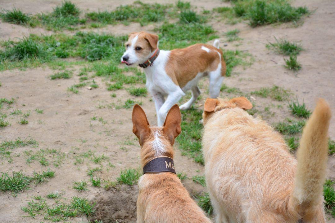 Bindung Mensch Hund