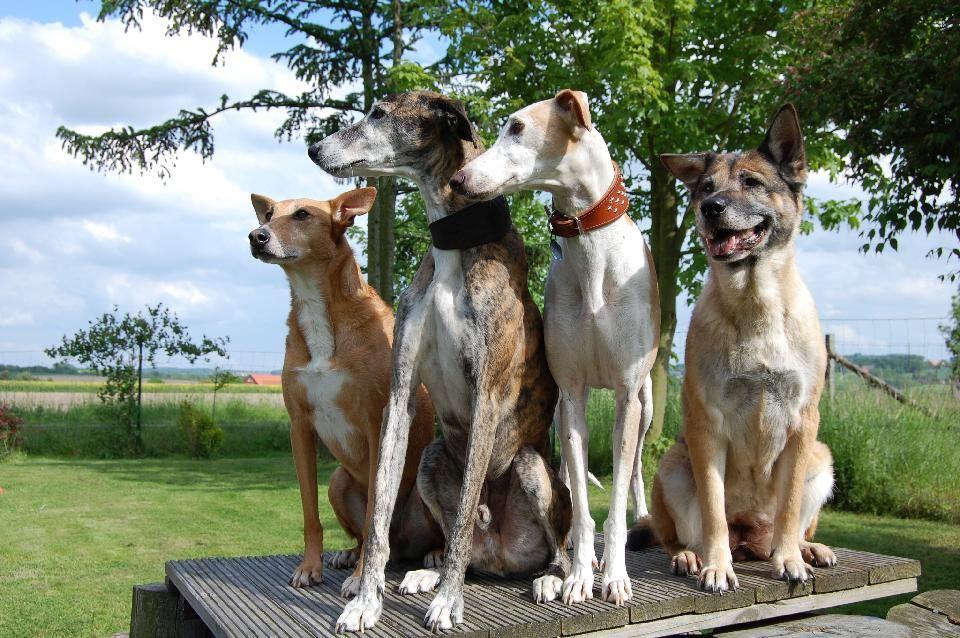 Aport Hundetrainer