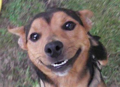 Kontakt und Anfahrt für Hundetraining bei A.P.O.R.T.