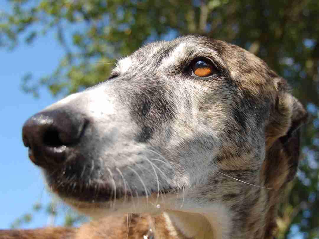 Hundewissen Abc Bei Aport Aus Sicht Des Hundes Aport Hundeschulede