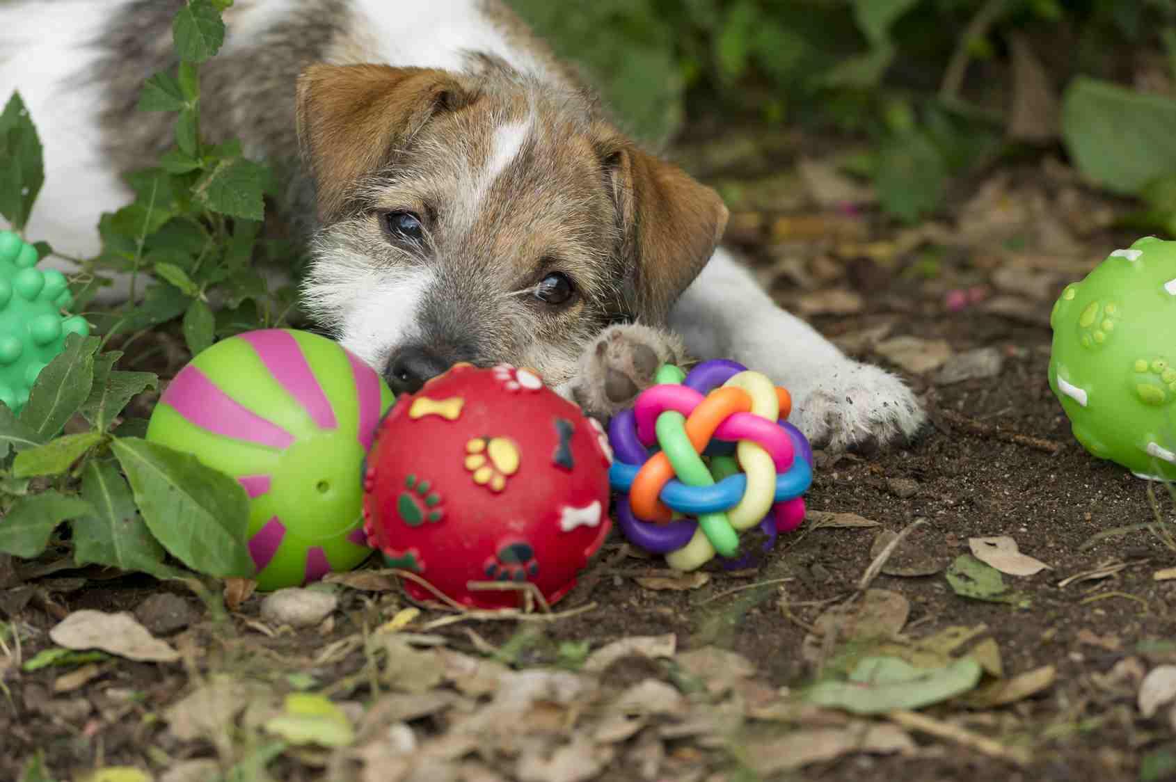 Ballspiel Hund