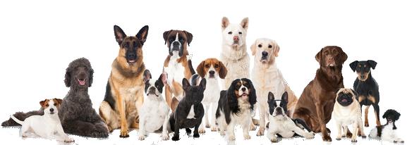 Hundewissen ABC bei A.P.O.R.T., Rassekunde und Domestikation