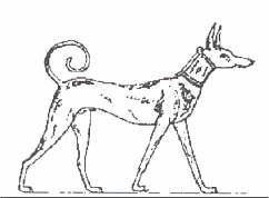 (cc) Altägyptischer Pharaonenhund Tesem vom Windhundtyp (ca. 3000 v. Chr.), wikipedia