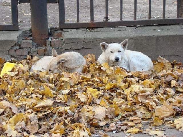 (cc) Andrey, Moskau, 2007, Feral dogs, Wikipedia
