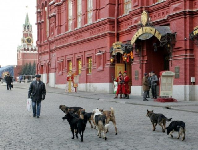 (cc) Анатолий Девятов, 2006, wikipedia Hunderudel auf dem Roten Platz in Modkau