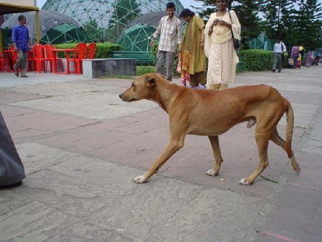 (cc) Biswarup Ganguly, 2006, Ost-Indien, Wikipedia
