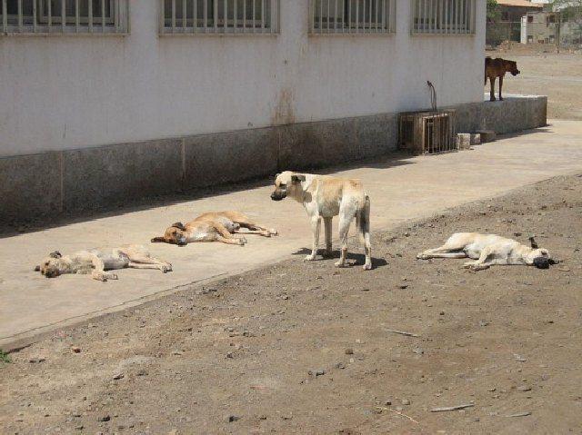 (cc) Insel Sal ,Kap Verde (Westafrika 2007), Wikipedia