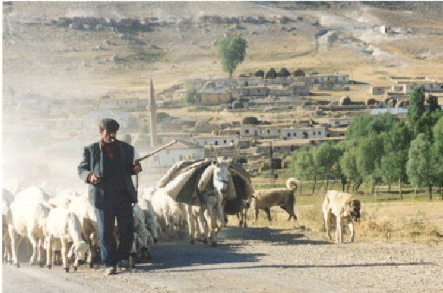 (cc) Hirte mit Kangal, 2006 Anatolien