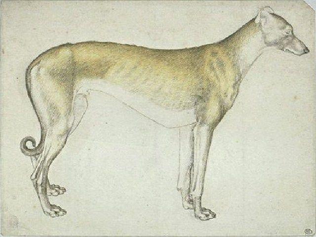 (cc) Künstler: Pisanello (1395–1455), Greyhound stehend, wikipedia
