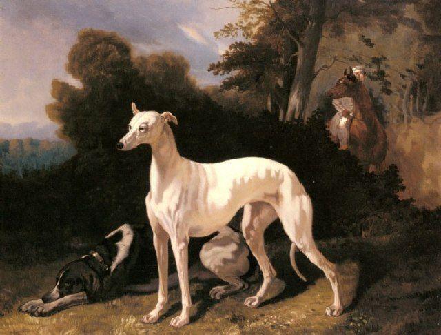 (cc) Künstler: Alfred Dedreux (1810–1860), Hetzhund und Bracke, wikipedia