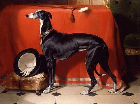 (cc) Künstler: Sir Edwin Henry (1841), Greyhoun, wikipedia