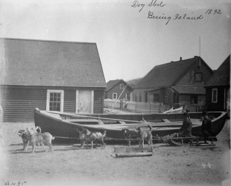 (cc) Hundeschlittengespann Beringinsel (1892), wikipedia