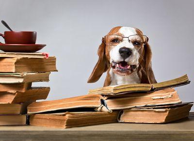 Blog A.P.O.R.T. Hundeschule