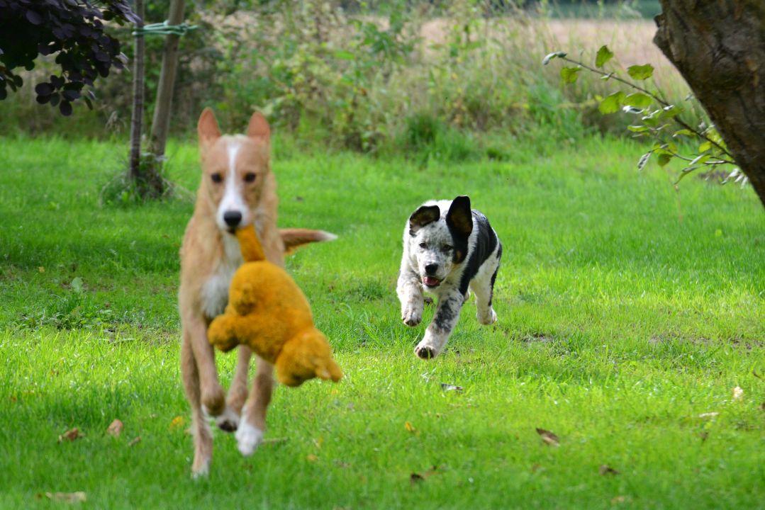 spielerisches Jagen und Verfolgen