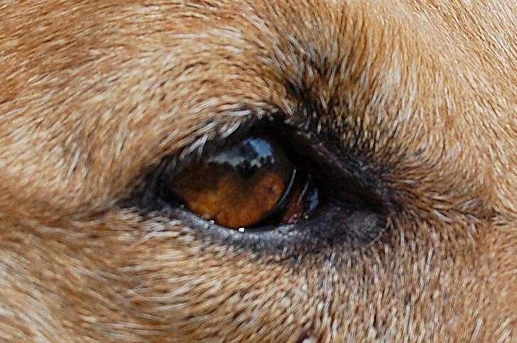 Hundefachwissen bei A.P.O.R.T. Hundeschule, das Auge ist die Seele des Hundes