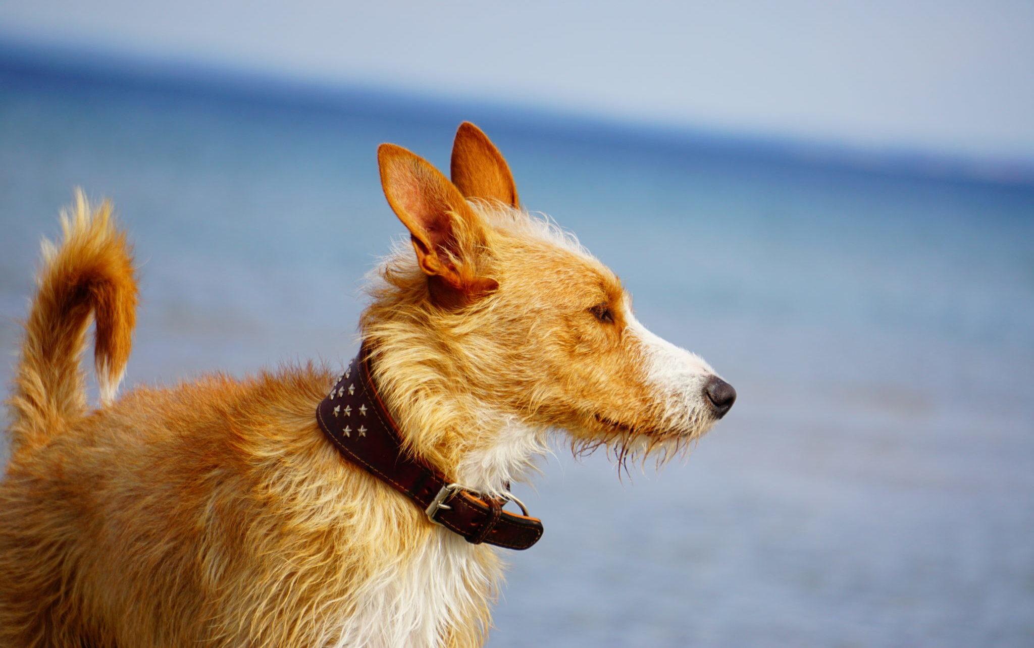 Hunde-Urlaub an der Ostsee.