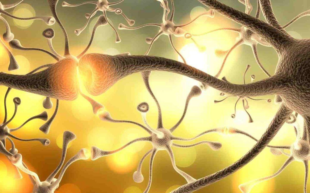 Stimmungsübertragung durch Spiegelneuronen