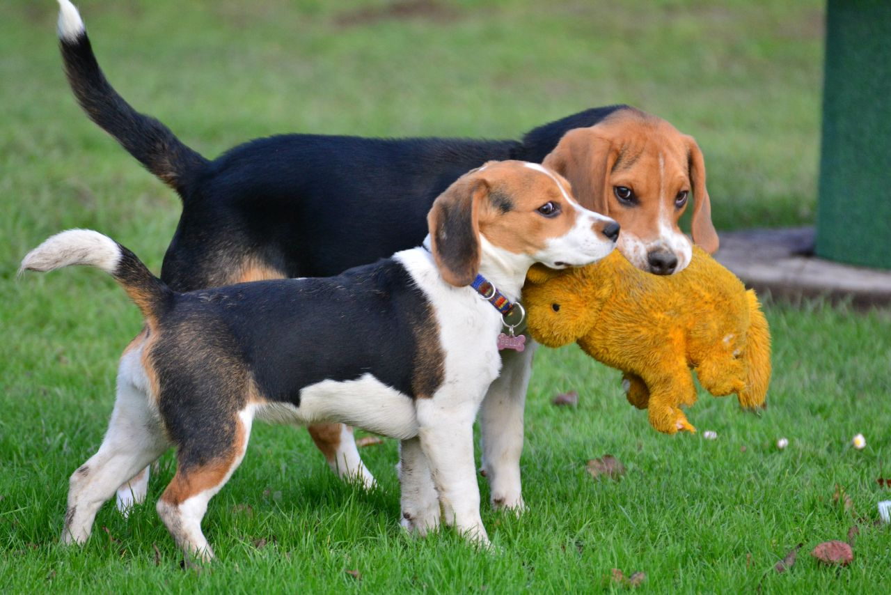 Hundefachwissen, Körpersprache Hund, Blickabwenden