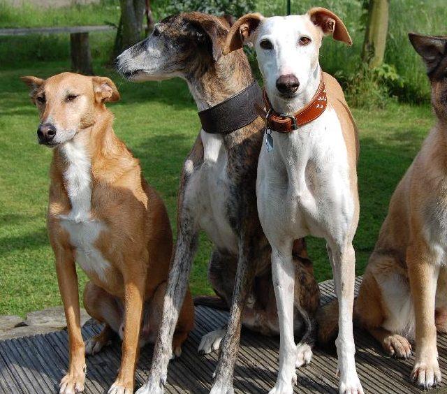 Beschwichtigungssignale beim Hund, A.P.O.R.T. Hundefachwissen