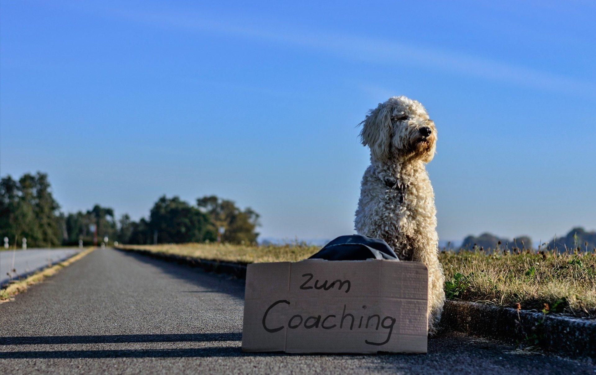 Coaching & Personaltraining für Hundehalter