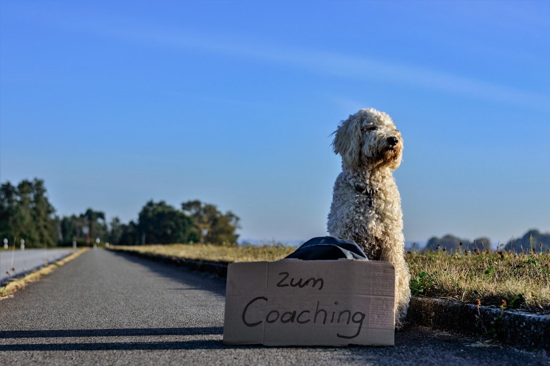 Coaching und Personaltraining für Hundehalter. Exklusivangebot mit systemisches Coaching.