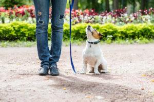 Sachkundeprüfung Hundeführerschein