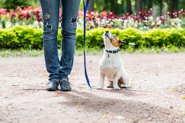 Sachkundeprüfung & Hundeführerschein